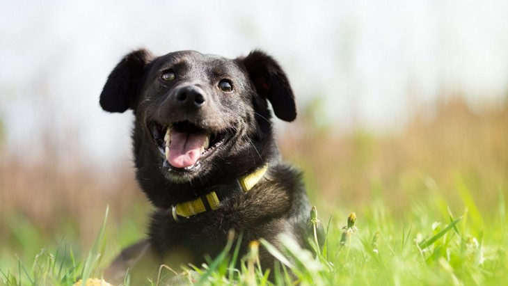 黒い犬は日光の下で体温が上がりやすいかどうかを検証【研究結果】