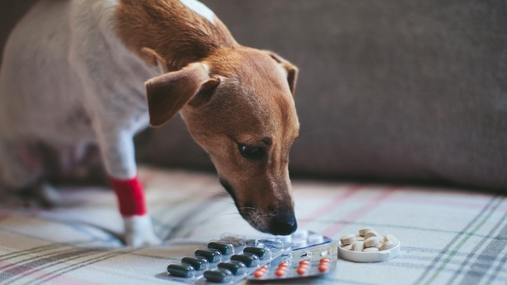 犬の皮膚がボロボロになる原因と対処法