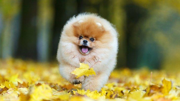 犬と秋に散歩するときの注意点5つ