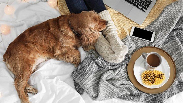 犬が飼い主の足の間で眠るときの心理とは?5つの気持ちを解説