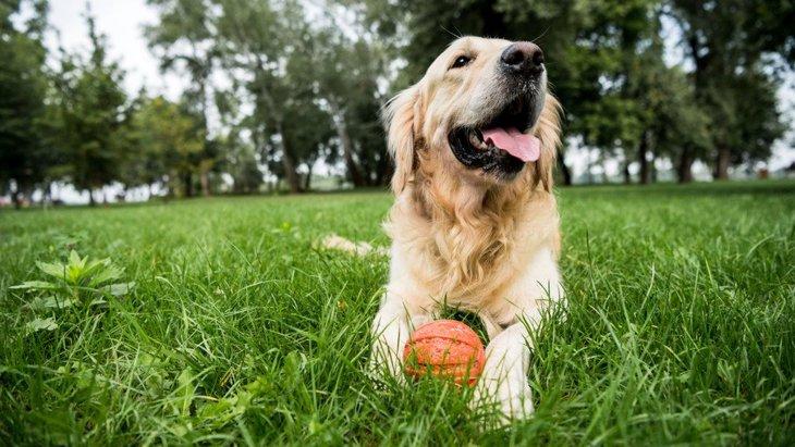 犬がほふく前進する時の心理5選