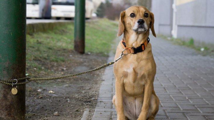 配慮してあげて!犬が飼い主に『捨てられた』と感じる行為4選