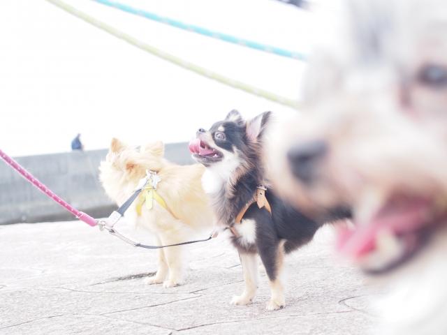 ノーリードで犬を歩かせる危険性について
