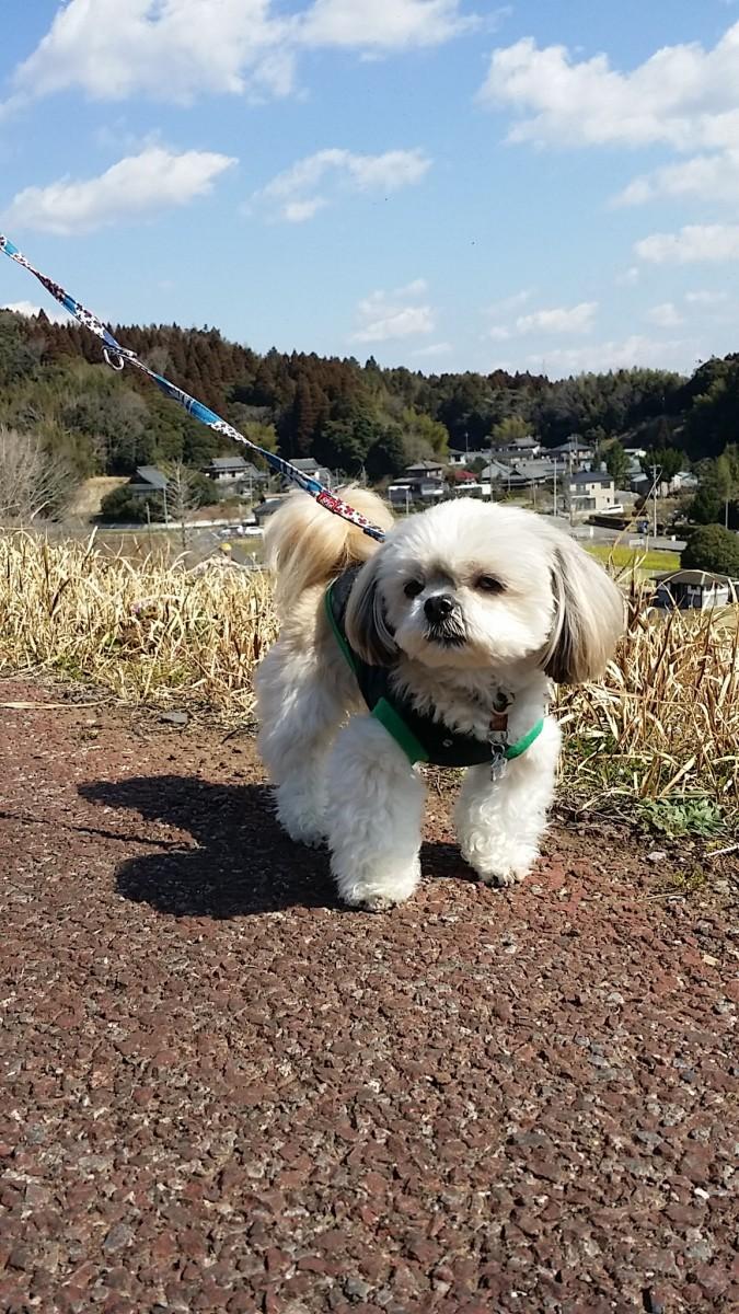 かけがいのない思い出に!旅行に適している犬が持つ4つの特徴