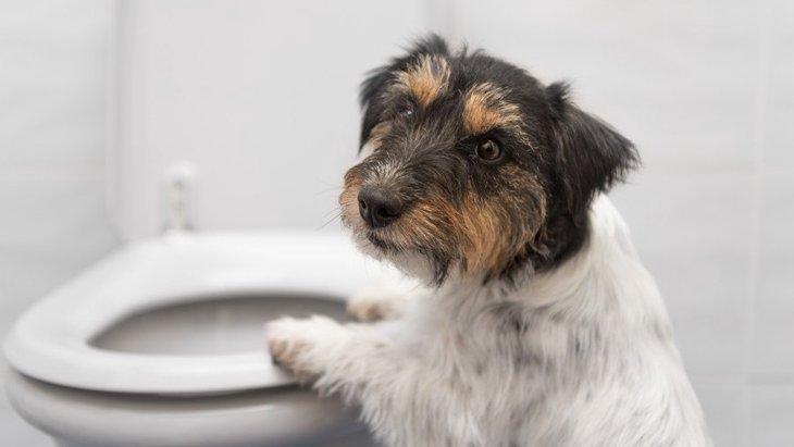 気づいてあげて!犬がトイレを我慢してる時の仕草5つ