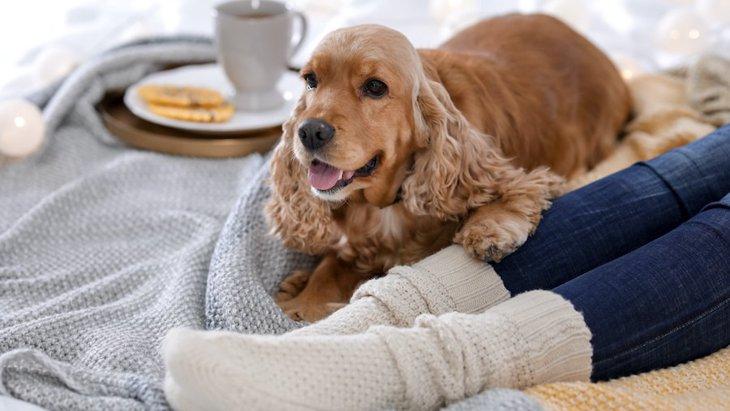犬に『暖房』は使うべき?適切な温度は?
