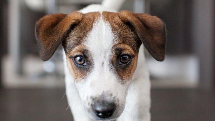 犬が満足できていない時によくする仕草5選