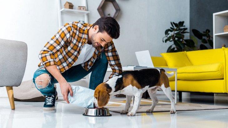 犬はブリ(鰤)を食べても大丈夫!与えるメリットと注意点