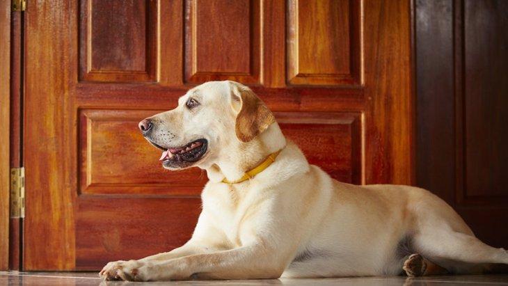 犬が飼い主の帰宅時に玄関で待っているときの心理3つ