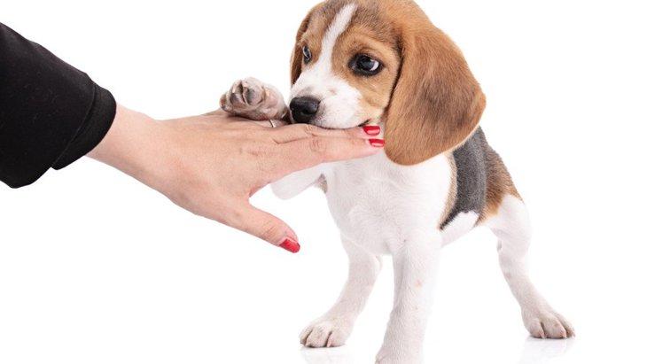 子犬にありがちな『問題行動』4選!危険なトラブルに繋がってしまうことも!