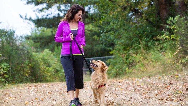 犬が散歩中に飼い主を見上げてくるときの心理とは?