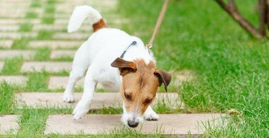 犬が散歩中にニオイを嗅ぐのはこんな理由があった!3つの心理と注意点