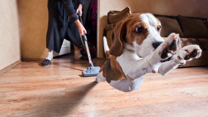犬が掃除機に怯えてしまう原因と克服する方法