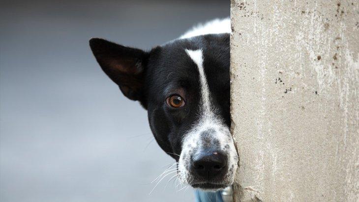 犬が気まずそうな顔をしている時の心理とは?