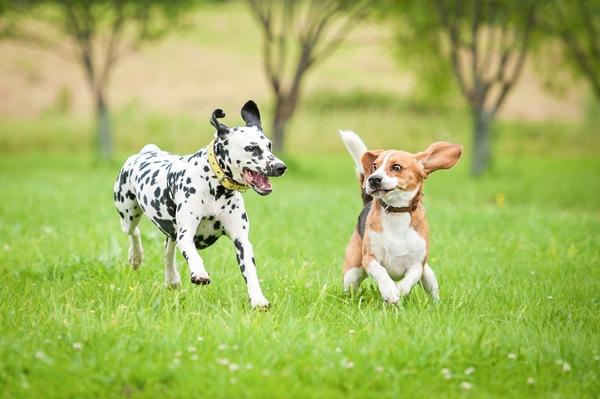 まるで楽園?コスタリカの保護施設で暮らす捨て犬たち
