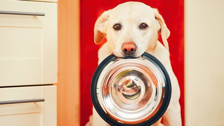 犬用ハンバーグの簡単手作りレシピ8選!