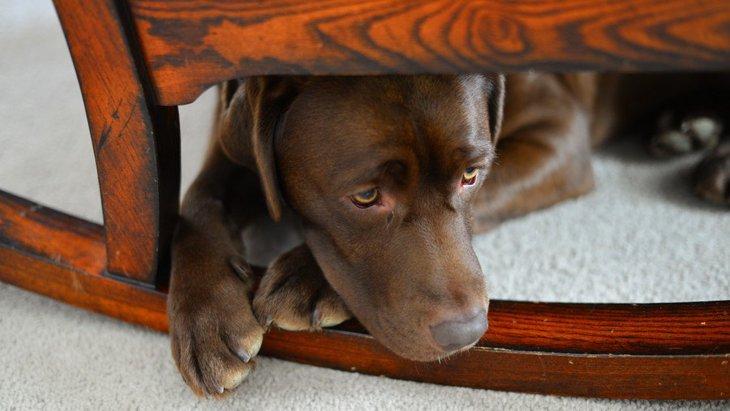 犬が『危険』を感じたときにする仕草や行動5つ