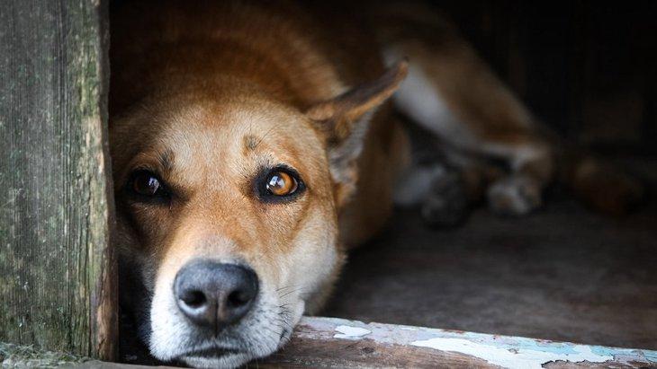犬は捨てられるとどうなる?5つの運命と絶対にしてはいけない理由
