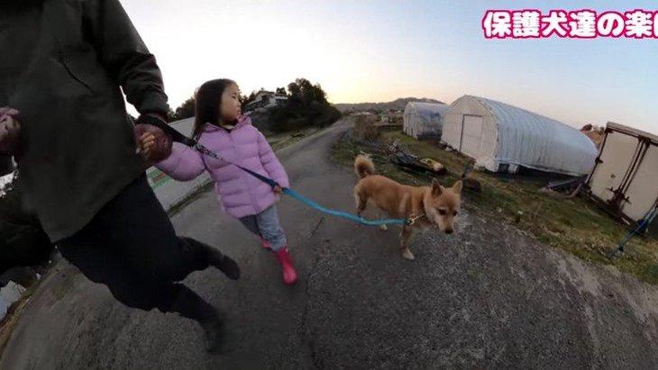 保健所出身!元『噛む野犬』と4歳女の子のほのぼの散歩に感動♡