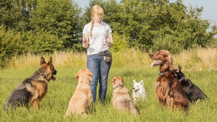 犬に関わる仕事の年収はどのくらい?