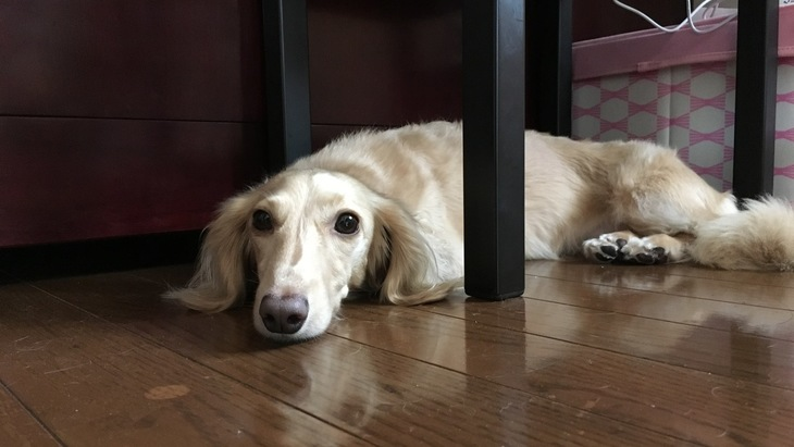 愛犬の粗相後の行動と、飼い主さんの正しい対処方法