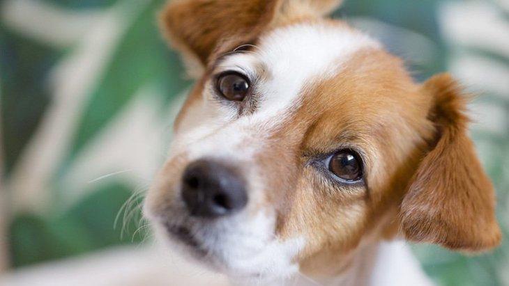 犬が人の足の間に座るときの心理4つ