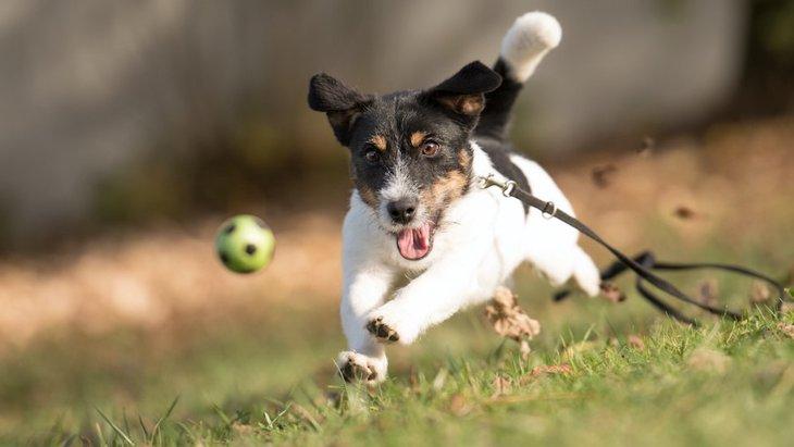 あなたの愛犬はどのタイプが好き?噛む・音が出る・動くおもちゃ6選