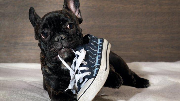 犬が飼い主の『靴』を好む理由3選