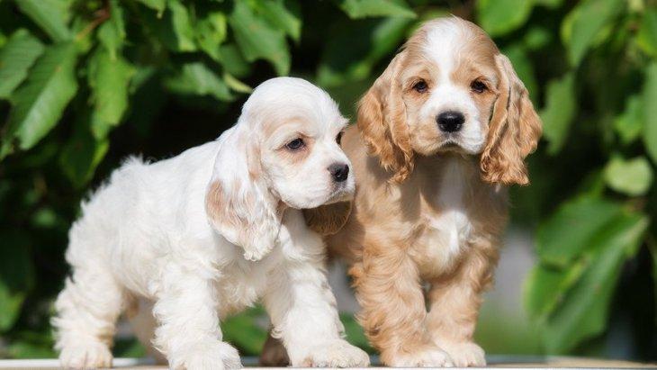 『自分に合った犬種』はどう選ぶべき?4つの基準や後悔しないためのヒント