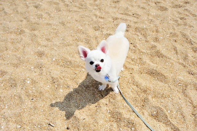 もうすぐ夏!愛犬のために気をつけるべき3つのこと