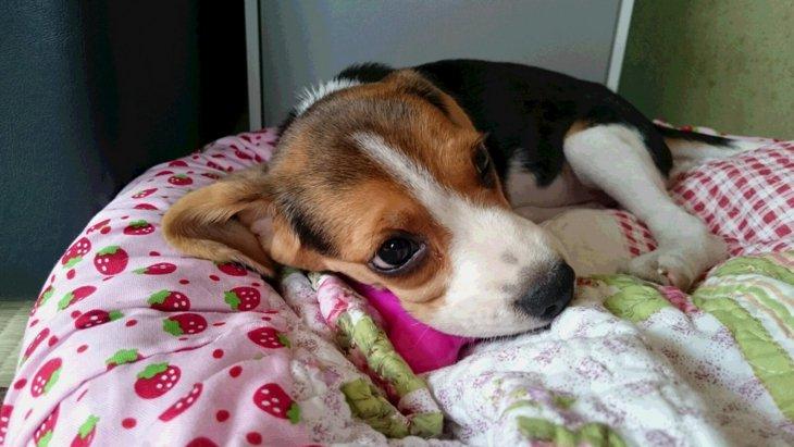 劣悪繁殖場から救われた命〜小さな子犬を抱いた重さ