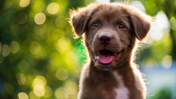 犬の新しいトレーニング『Do As I Do』とは?