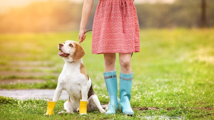 雨の日も犬の散歩は必要?