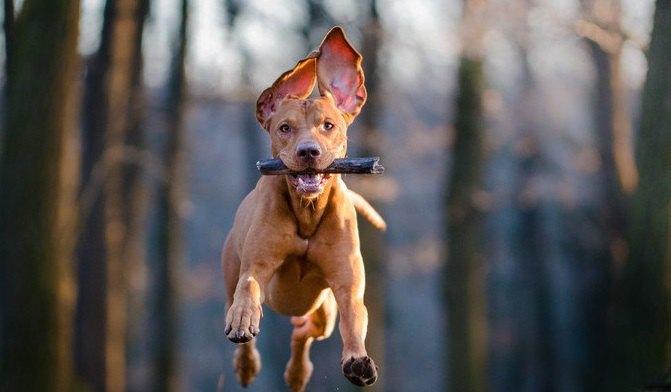 犬に無理をさせてはいけない『遊び方』4選
