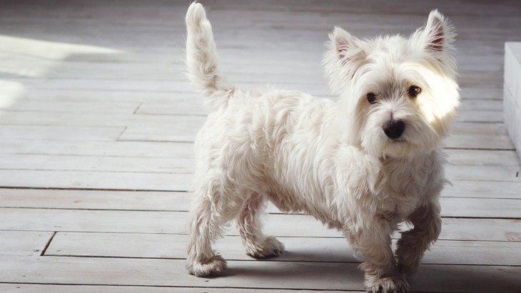 犬が落ち着かない時の心理4選!そわそわしているのには理由があった?