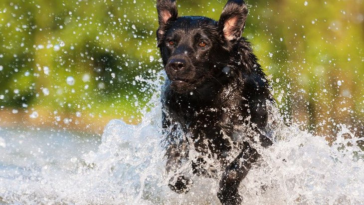 愛犬とできる新しいチャレンジ4選!良い刺激を与えて生活を豊かに
