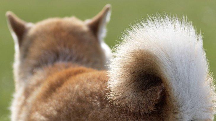 犬の尻尾がゆっくり揺れている時の気持ちとは?