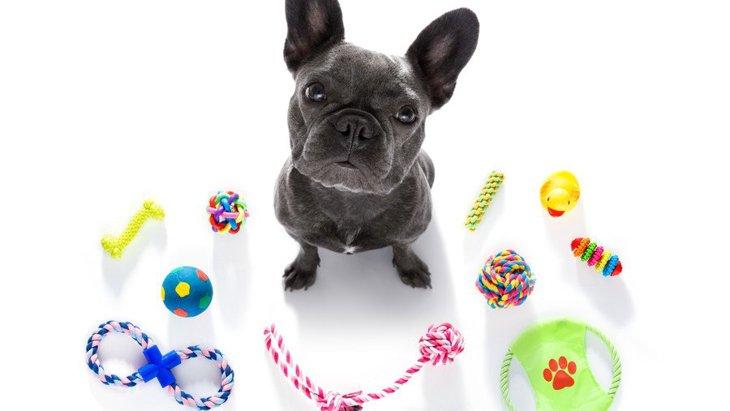犬が『おもちゃにすぐ飽きてしまう』理由6選