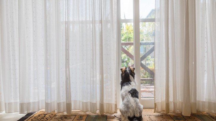 犬がカーテンを破ってしまう!主な原因とやりたい対策