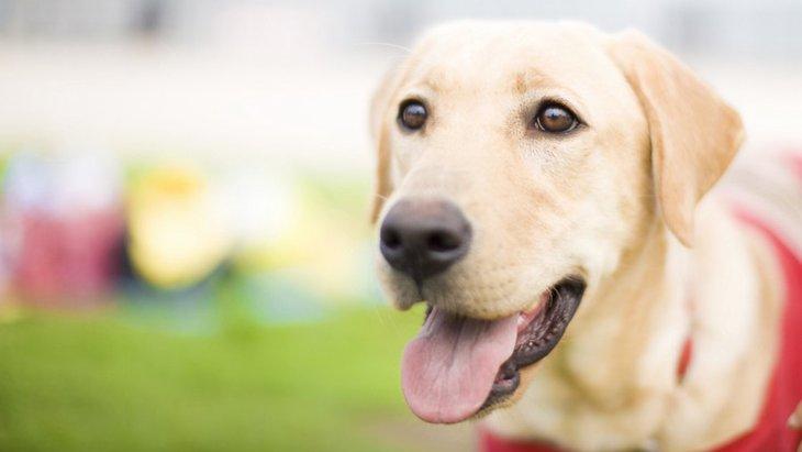 犬は糖尿病の人を見分けることができる?