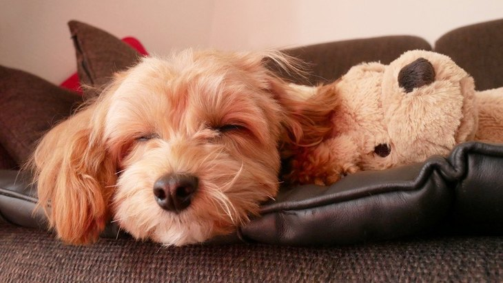 犬が『熟睡』しているか見極める方法5選