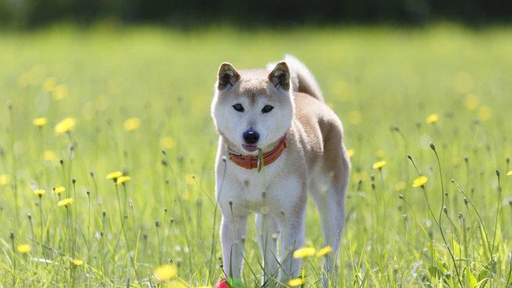 犬の『カーミングシグナル』って何?行動や気持ちを徹底解説!