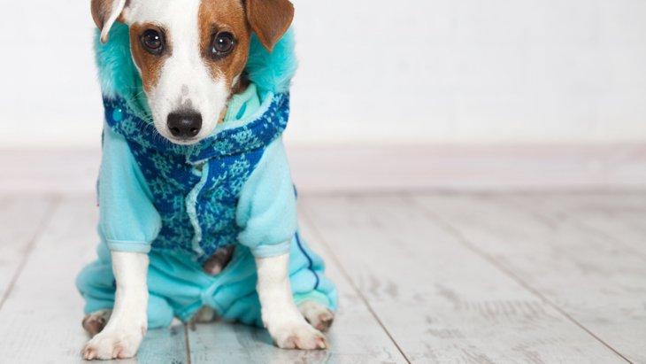 やってしまいがちな間違った犬の寒さ対策