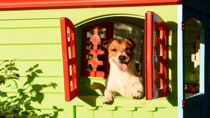 犬が「ハウス嫌い」になる原因とその解決法