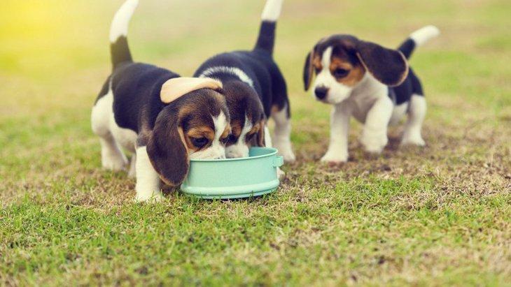 犬にキャットフードを与えるのは危険?ドッグフードとの違いとは