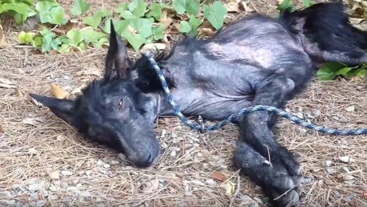 骨と皮だけ…瀕死の状態からレスキューされた犬の大どんでん返し!