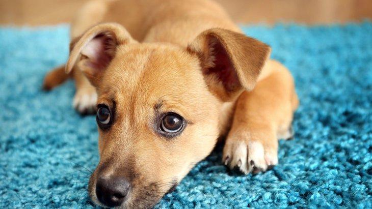 室内犬にとっての「危険な部屋」と「安全な部屋」の違い