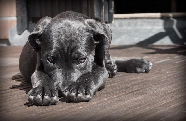 犬の腫瘍とは?その種類や治療法