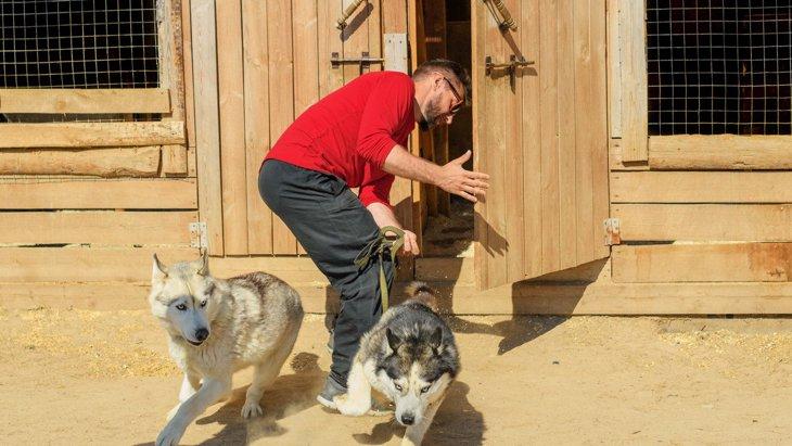 犬が『脱走』する意外な理由3選!逃げるシーンや対処法を解説