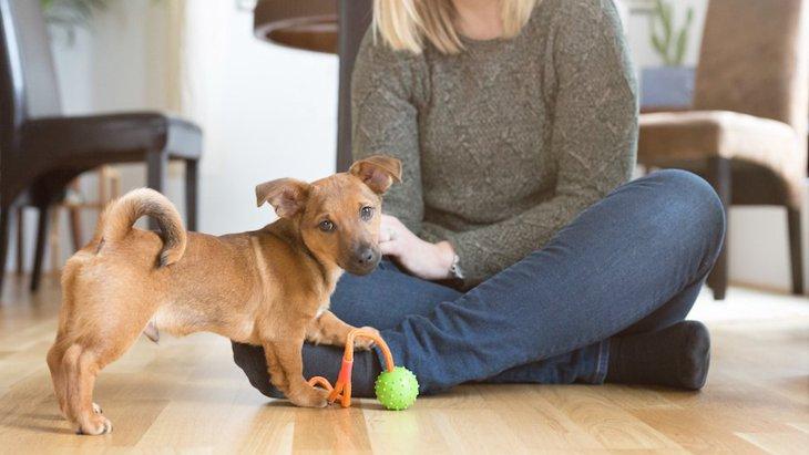 犬が飼い主にいつまでもくっついてくる理由は?もしかすると病気かも?